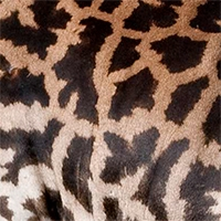 masai-giraffe-pattern