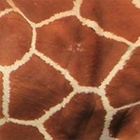 reticulated-giraffe-pattern