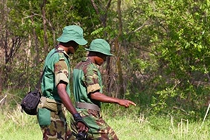 save-giraffes-wildlife-rangers-patrol