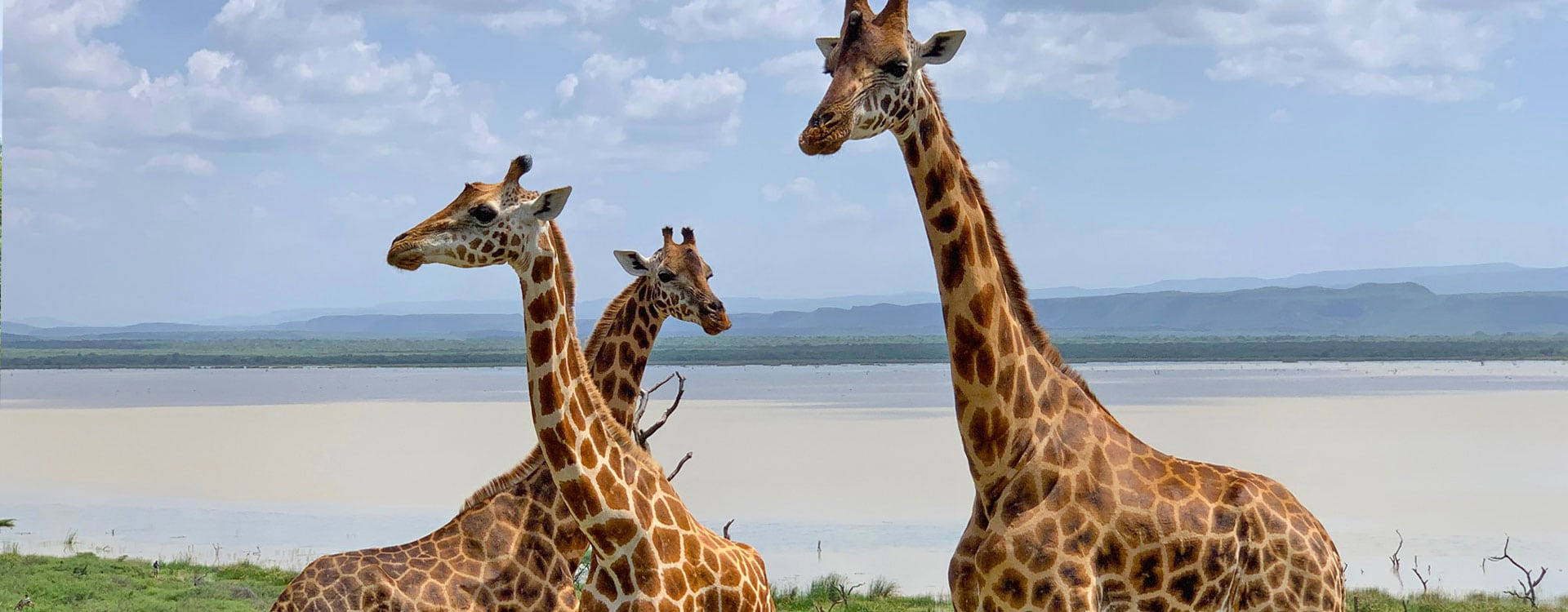 donate-save-giraffes-now