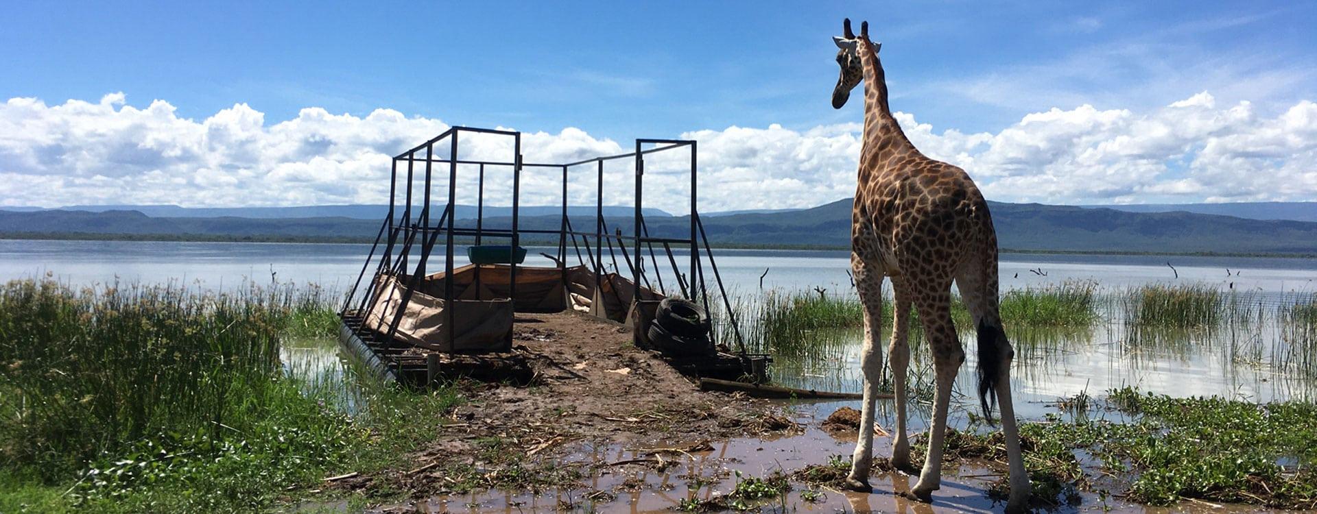 ruko-giraffe-barge