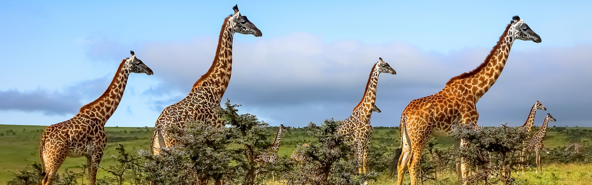 masai-giraffe-conservation-tanzania