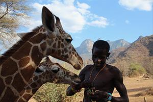 giraffe-orphans-feeding